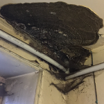 Fruiting Body of Dry Rot (Sheffield)