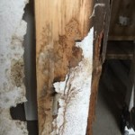 Dry Rot in Property in Sheffield