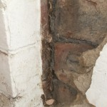 Visible dry rot strands in Sheffield