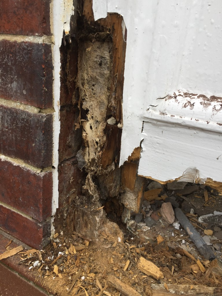 In this picture dry rot strands can be seen along with some mycelium feeding on the sugars in the timber. We fixed the Sheffield property